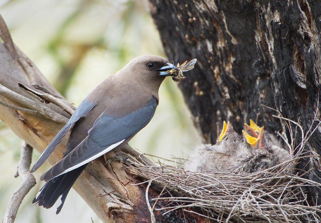 Little Songbirds Wild Bird Seed